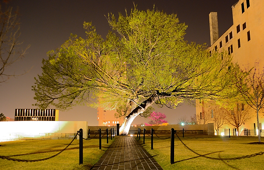 Survivor Tree, Oklahoma City Bombing Memorial