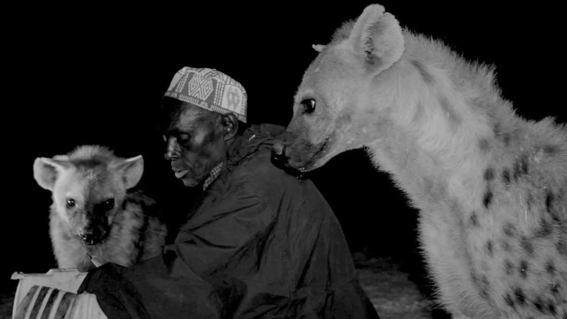 Yussuf Mume Saleh and the hyenas. (Credit: Jessica Beshir)